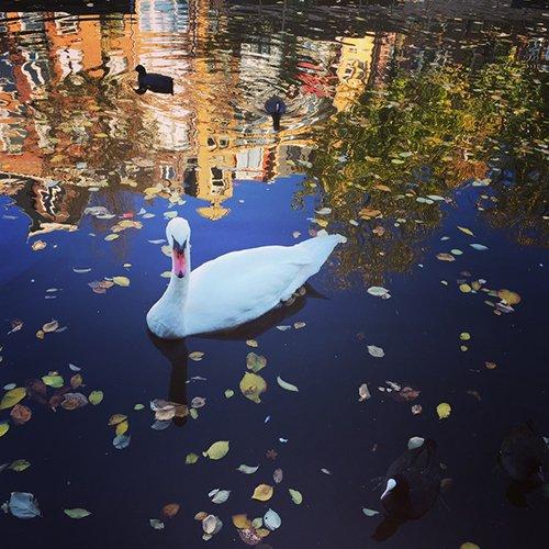 Amsterdam boat life
